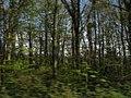Woodland at Plas Newydd - geograph.org.uk - 808900.jpg