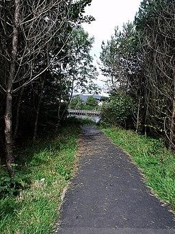 Woodland walk around Broadwood - geograph.org.uk - 1508073