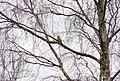 Wraxall 2011 MMB 54 Woodpecker.jpg