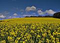 Yellow spring (7158886999).jpg