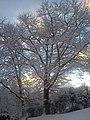 Zimowy wschód słońca - panoramio.jpg