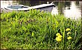 'Old Salty' tied-up nr. Shepperton Lock, Thames. - panoramio.jpg