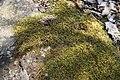 «Олександрія» Лишайник IMG 1700.jpg