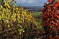 Ötisheim Blick durch die Weinberge nach Mühlacker - panoramio.jpg
