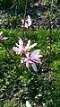 БотаническийСадCH3.jpg
