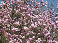 Ботанічний сад ім. М.Гришка IMG 9539.jpg