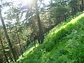 Видна склон на Андроновских горах, начало июля 2011 - panoramio.jpg