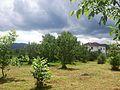 Гостевой дом - panoramio (1).jpg