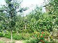 Градина - panoramio.jpg