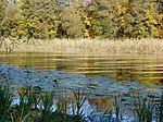 Гідрологічна пам'ятка природи озеро Трубин.jpg