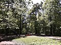 Детская площадка в роще-парке Гузовского.jpg