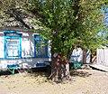 Дом Антоновых в Зеленовке (Дереву-шелкуну 150 лет, он ровесник села) - panoramio.jpg