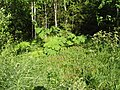 Замкадье (Podmoscowian jungles) - panoramio.jpg
