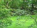 Затерянный в лесу пруд. (Lost in the forest pond) - panoramio.jpg