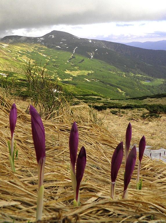 Карпатський національний природний парк (30).jpg