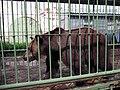 Медведица Маша, олицетворение медведя с герба Ярославля.jpg