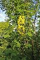 Національний ботанічний сад 17.JPG