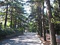 Никитский ботанический сад 2010 03.jpg