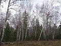 Осень и лесополоса.jpg