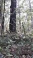 Палка с георгиевской лентой на безымянной могиле вместо памятника.jpg