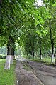 Парк Садиба фон Мекк, Копилів.jpg