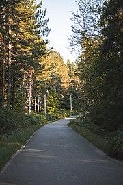 Парк природе Преслица 21.jpg