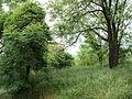 Парк шума Гази Баба во мај (155).JPG
