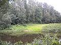 Р. Шешупе - panoramio (2).jpg