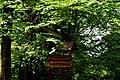 Скелі Довбуша DSC 0596.jpg