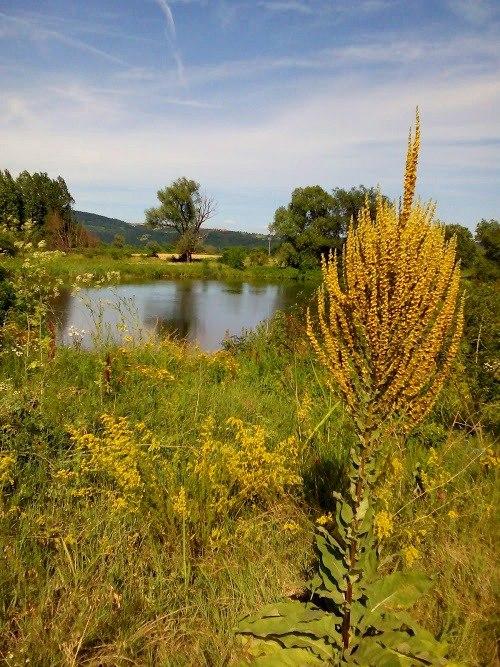 Специјални резерват природе Брзанско Моравиште, вода, сунце, живот