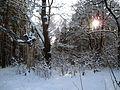 Старая дубовая аллея - panoramio.jpg
