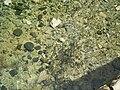 מים צלולים בניאס.JPG