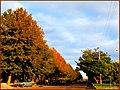 طبیعت پاییزی مراغه - panoramio (1).jpg
