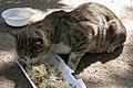 گربه -تهران-cat in iran 03.jpg