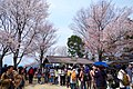 吉野山 花矢倉展望台 Hana-yagura observatory in Yoshinoyama 2014.4.12 - panoramio.jpg