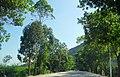 广东省江门市S271公路景色 - panoramio (144).jpg