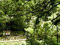 拉拉山森林保育區 Lalashan Forest Reserve - panoramio.jpg