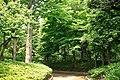 東高根森林公園 - panoramio (50).jpg