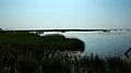 若尔盖花湖-错热洼坚Cuorewajian Lake - panoramio (5).jpg