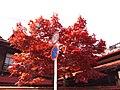 赤 - panoramio.jpg