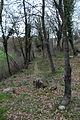 01 Bosc del Campàs (l'Esquirol).JPG