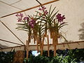 05441jfMidyear Philippine Orchid Show Quezon Memorial Circlefvf 01.JPG
