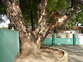 07890jfCamposanto Park Raymond Nonnatus Church Parish Moncada Tarlacfvf 36.JPG