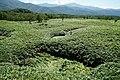 140829 At Shiretoko Goko Lakes Hokkaido Japan12bs5.jpg