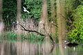 16 Lengwiler Weir.jpg