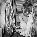 1958 visite d'une délégation INRA au Haras du Pin Cliché Jean Joseph Weber-61.jpg