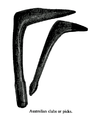 19th century knowledge primitive tools australian wooden club or pick.PNG