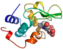 Ribbon diagram of the backbone of lysozyme bound to its reaction product shown as spheres.