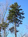 2007-10-25 60 BjR EPR mature (02) DDumais.jpg