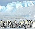 2007 Snow-Hill-Island Luyten-De-Hauwere-Emperor-Penguin-13.jpg
